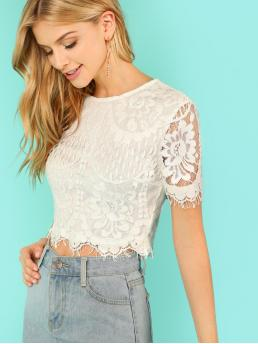 Romantic Plain Top Slim Fit Round Neck Short Sleeve Pullovers Beige Crop Length Flower Embroidery Eyelash Lace Crop Top